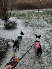 They didn't know what to think about the snow.